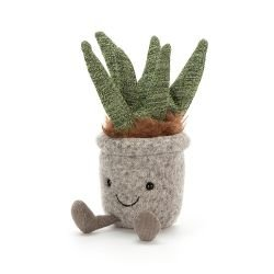 Mini plante | Aloe
