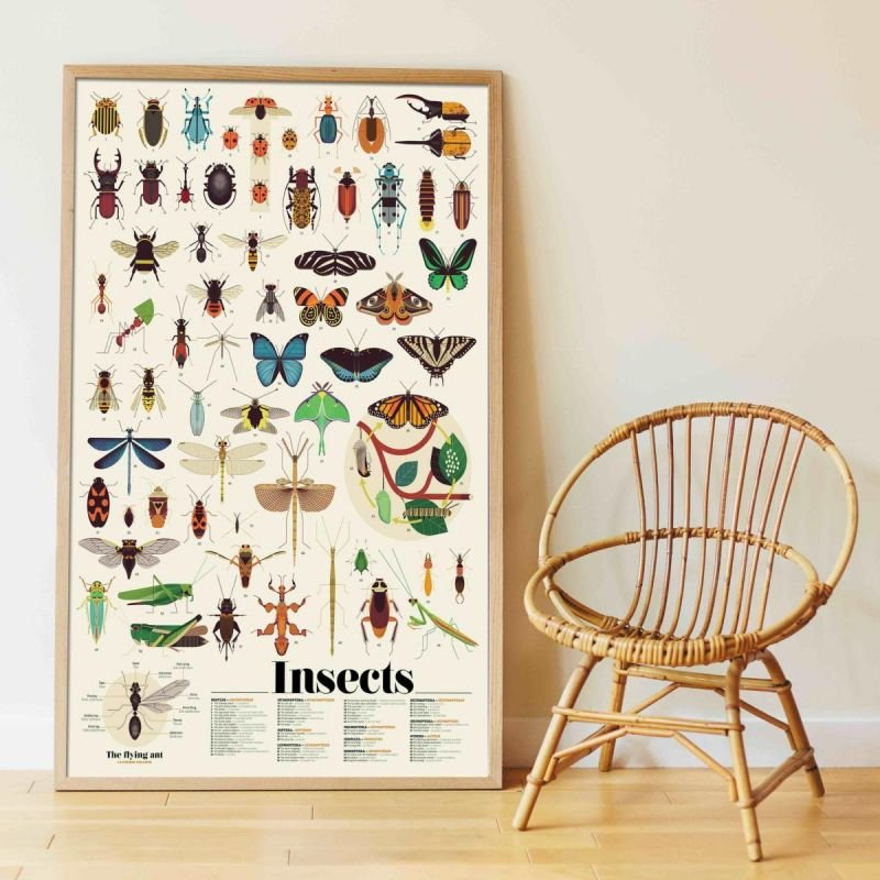 Poster Stickers Insectes