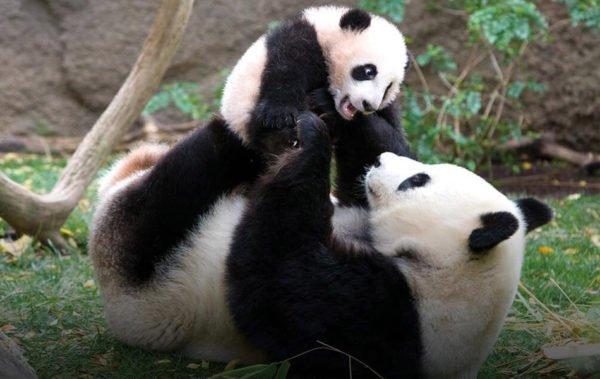 10 idées cadeaux Panda